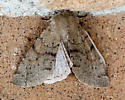 Unidentified Moth - Orthosia annulimacula