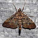 Which moth is this? - Duponchelia fovealis