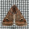 Eucoptocnemis fimbriaris for Louisiana? - Eucoptocnemis fimbriaris