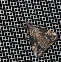 Green Cloverworm Moth? - Hypena scabra