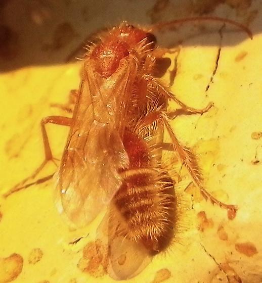 Hymenoptera 9.21.17 - male
