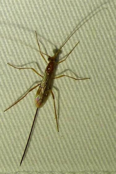 unknown insect