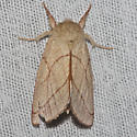 Moth unknown - Hyparpax perophoroides