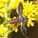 Trichopoda - Feather-legged Flies - Trichopoda lanipes