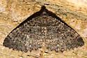 Which moth is this? - Triphosa californiata