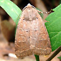 Intractable Quaker Moth - Himella fidelis