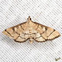 Hollow-spotted Blepharomastix  - Hodges #5182 - Blepharomastix ranalis