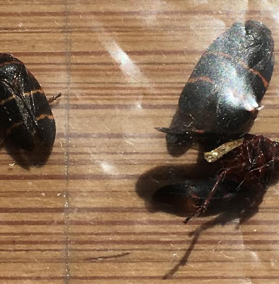 Need help with inside beetle