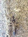 Ichneumonidae on a river bar