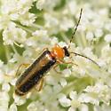 Soldier(?) beetle - Rhagonycha mollis