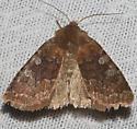 Reddish Speckled Dart - Hodges#10994 - Cerastis tenebrifera