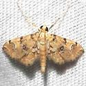 moth - Elophila faulalis