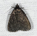 Not sure about this one - Idia rotundalis