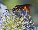 Wasp 416A 6408 & 6417 - Ceropales robinsonii