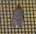 Moth ID help.... - Psilocorsis