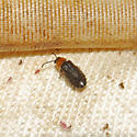 Beetle 09.14.2009 029