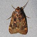 Grease Moth - Hodges#5518 - Aglossa cuprina