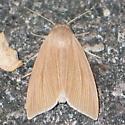Henry's Marsh Moth (brown form) - Acronicta insularis