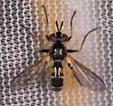 Fly for ID - Hemyda aurata