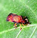 leaf miner beetle?  basswood? - Baliosus nervosus