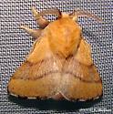 Forest Tent Caterpillar Moth - Malacosoma disstria