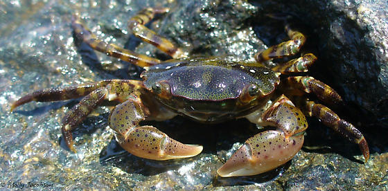 We Came over on The Mayflower, Too! A Timeline of North American Invasive Species