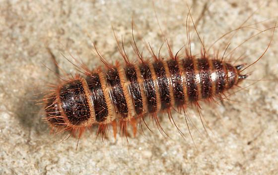 Three signs of Carpet Beetles