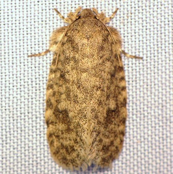 Tiquadra inscitella (Hodges #427)? - Tiquadra inscitella