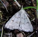 Moth 080820 - Chytolita morbidalis