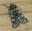 Star Moth - Feralia jocosa