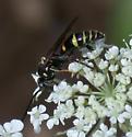 black & yellow wasp - Gorytes