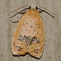 Sparganothoides lentiginosana - Hodges #3731 - Sparganothoides lentiginosana - female