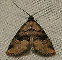 visitation moth - Dyspyralis illocata