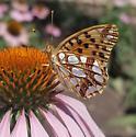 Georgian butterfly