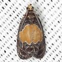Olethreutes osmundana - Hodges #2829 - Olethreutes osmundana