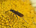 Insect 400A 3962-3963 - female