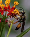 Great Golden Digger Wasp (Sphex ichneumoneus) - Sphex ichneumoneus - male
