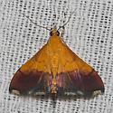 Bicolored Pyrausta Moth - Hodges#5040 - Pyrausta bicoloralis