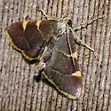 Argyrostrotis or kin? - Hypsopygia olinalis