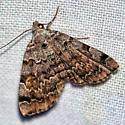 Moth on Moth Sheet - Idia americalis