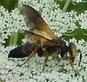 Wasp - Tachytes guatemalensis - female