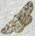 Brown-shaded Gray Moth - Iridopsis defectaria - male
