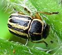 Yard Beetle