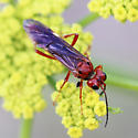 Red Sawfly