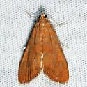 Waterlily Borer - Elophila gyralis