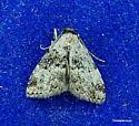 Small moth... - Dyspyralis illocata