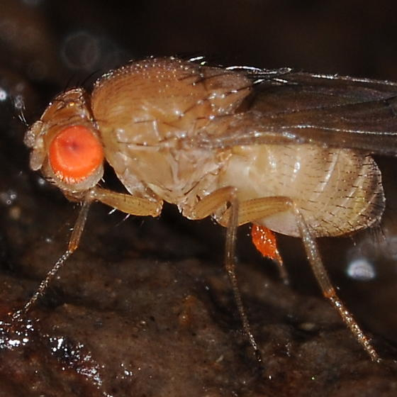 Side view - Drosophila
