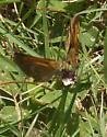 another Skipper for ID