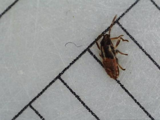 Unknown in NM