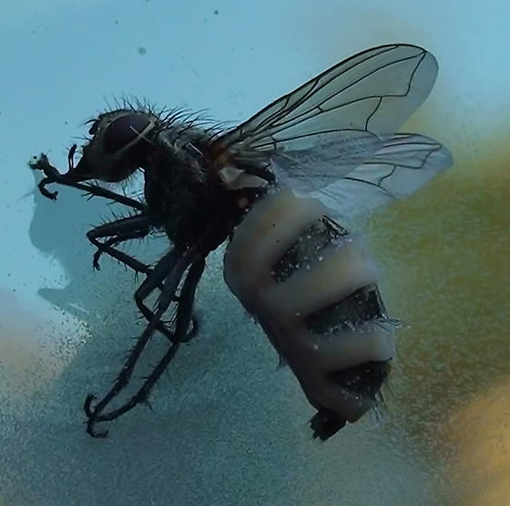 Before frassing...what happened to this fly?